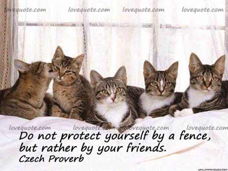 quotes on friendship with pictures. A Cute Friendship Quote